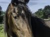 YDC-Paarden-NR0010-1-van-1