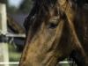 YDC-Paarden-NR0019-1-van-1