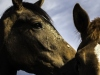 YDC-Paarden-NR0026-1-van-1