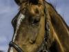 YDC-Paarden-NR0029-1-van-1
