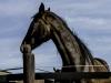 YDC-Paarden-NR0031-1-van-1