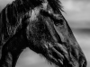 YDC-Paarden-NR0033-1-van-1