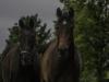 YDC-Paarden-NR0036-1-van-1