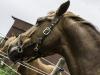 YDC-Paarden-NR0038-1-van-1