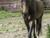 YDC-Paarden-NR0040-1-van-1