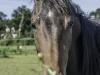 YDC-Paarden-NR009-1-van-1