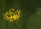 YDC-Macro-Veldbloemen-Nr0012 (1 van 1)